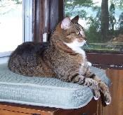 lorna barrett's cat bonnie