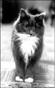 lorna barrett's cat betsy